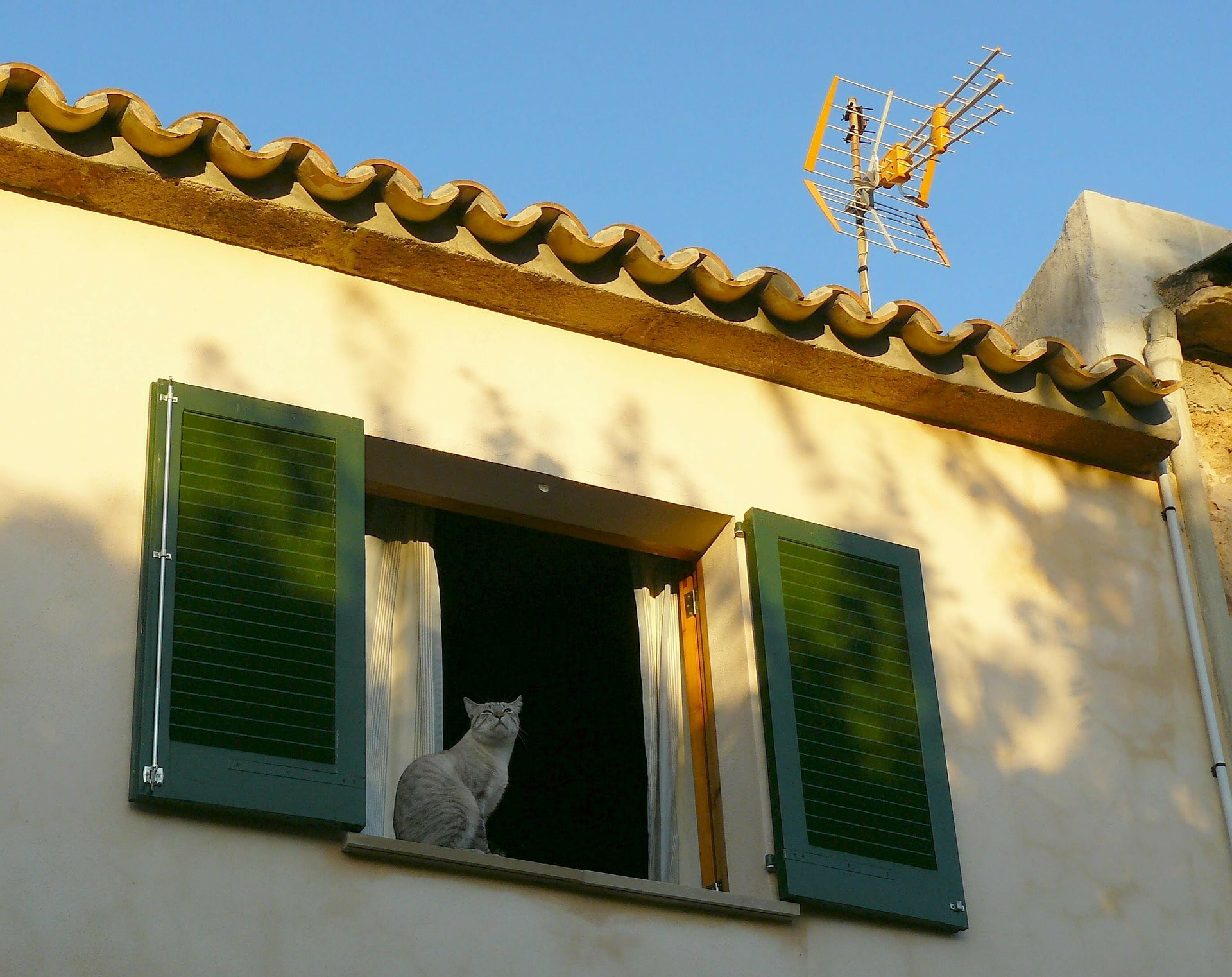 Photo of Cat on A Window