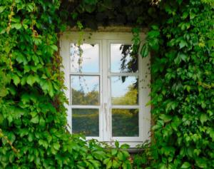Photo of a Window in green house